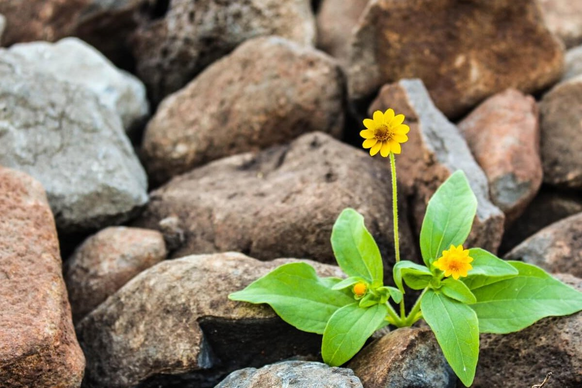 Enhancing Personal Resilience – managing stress and staying positive Podcast
